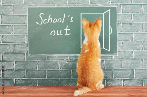 Fényképezés  Funny school holiday concept with scientist cat