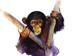 watercolor monkey - 111309162