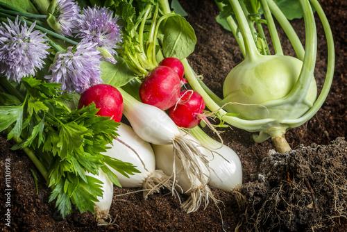 fresh vegetable in the garden - 111309178