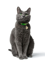 A Beautiful Gray Cat With Gree...