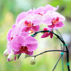Fototapeta Orchids