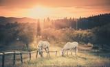 Fototapeta Horses - Wild horses and tuscan sunrise
