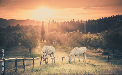 Canvas Prints Cappuccino Wild horses and tuscan sunrise