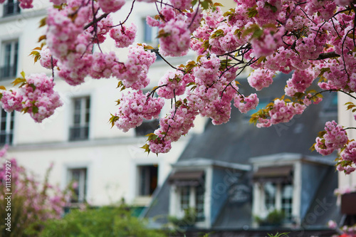 Photo  Typical Parisian building and cherry blossom trees