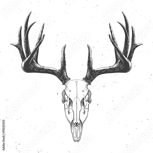 Tablou Canvas deer skull on white