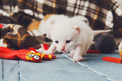 Keuken foto achterwand Kat White Newborn kitten in a plaid blanket