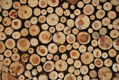 pnie-drzew
