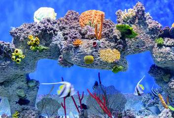 Exotic underwater world of shallow water coral reef