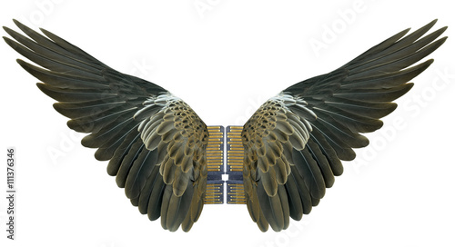 Poster Aigle Bird wings isolated on white background