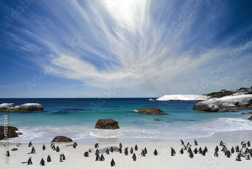 Montage in der Fensternische Südafrika The penguins at Boulder's beach