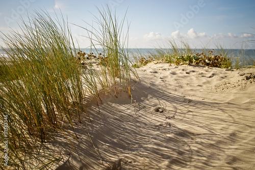 Peigne marin © as95100