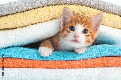 Kitten lying on towels Poster