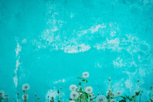 Blue Wall With Flowers