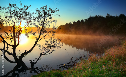 Poster Marron chocolat Lonely tree growing in a pond at sunrise