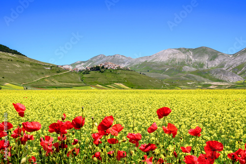 A flowery field with a village in the background #111411540