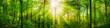 Leinwanddruck Bild - Wald Panorama mit grünen Buchen und schönen Sonnenstrahlen