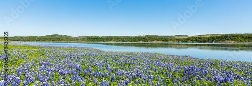 Tuinposter Texas Bluebonnets