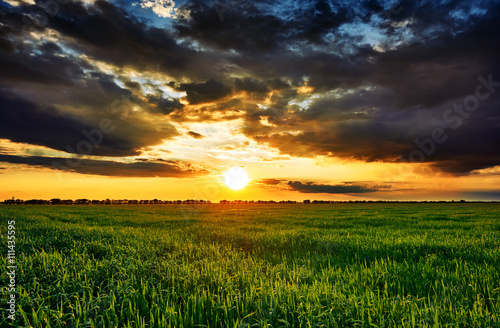 Fotobehang Meloen sunset in green field, summer landscape, bright colorful sky and clouds as background