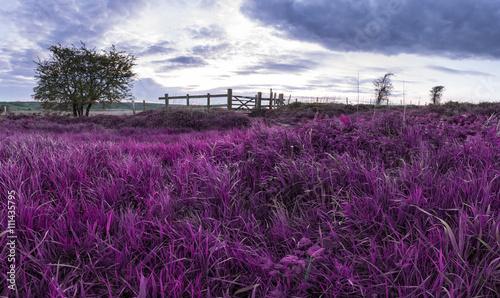 Foto op Aluminium Aubergine Beautiful English countryside landscape over fields at sunset wi