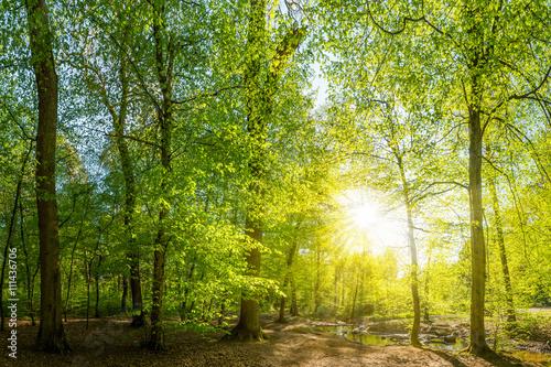 Papiers peints Forets Lichtung im Wald mit Bach und Sonne