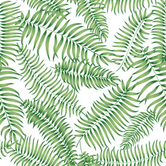 fototapeta tropikalny liść palmowy