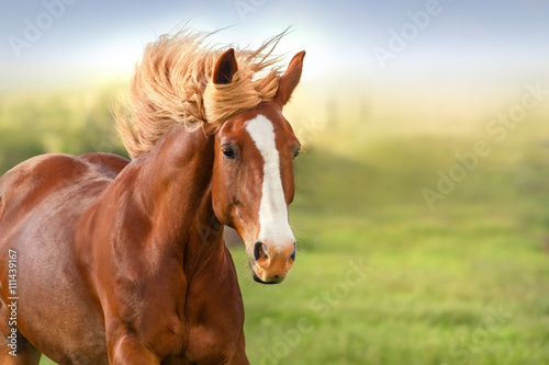 Foto op Canvas Paarden Beautiful red horse with long mane portrait in motion
