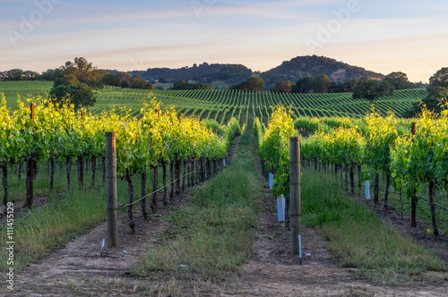 Tuinposter Wijngaard Sunset in the vineyards of Sonoma county, California