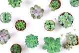 pattern of mixed succulents plant in pot on white background