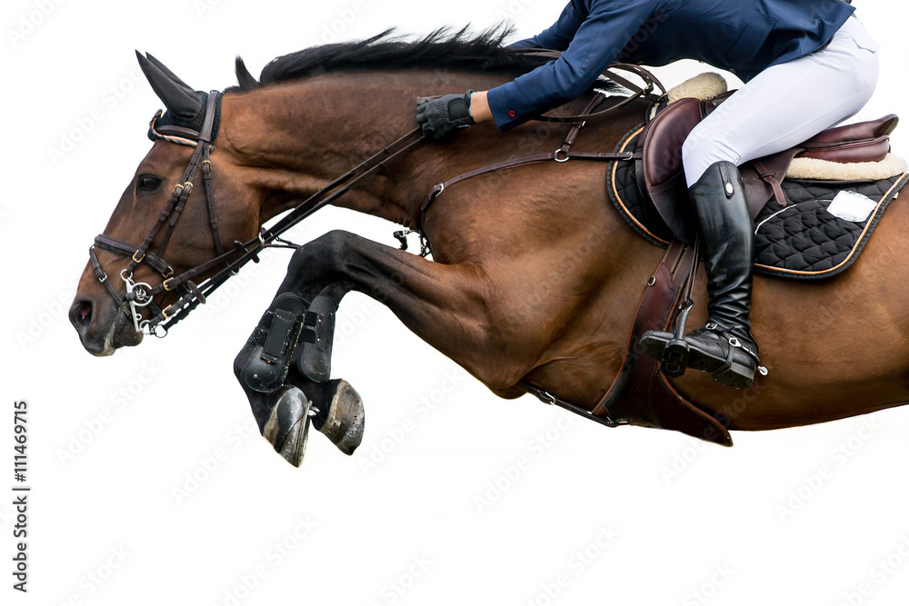 Fototapeta Horse Jumping, Equestrian Sports, Isolated on White Background