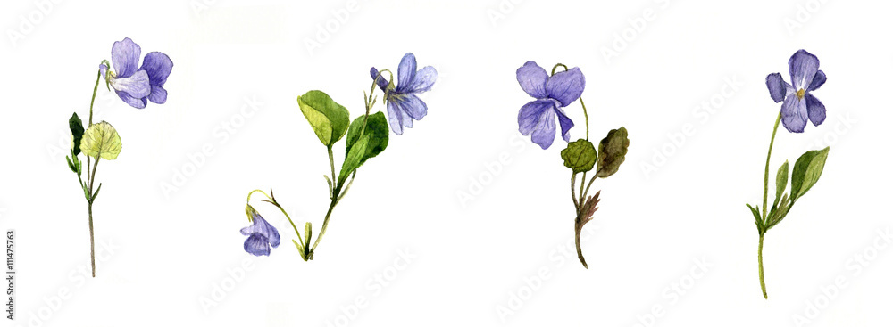 Fototapety, obrazy: watercolor blue wild flowers