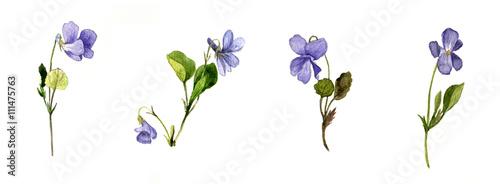 Fotografía watercolor blue wild flowers
