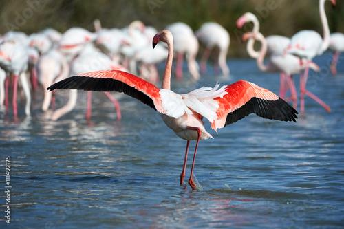 Foto op Aluminium Flamingo Group of pink flamingos