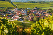canvas print picture - Baroville, Champagne vineyards in the Cote des Bar area of the Aube departm