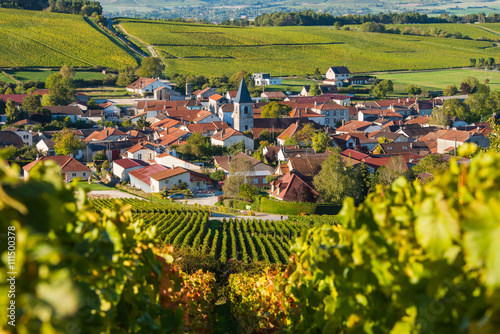 Foto auf Gartenposter Honig Baroville, Champagne vineyards in the Cote des Bar area of the Aube departm