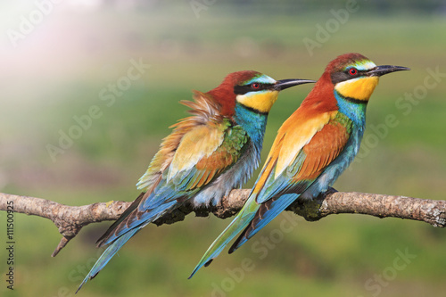 Fotografie, Obraz  beautiful picture with colorful birds with sunny hotspot