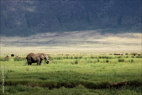 African elephant in the Ngorongoro crater in the background of g