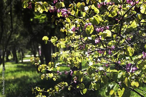 In de dag Begraafplaats Весеннее дерево