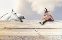 Zwei Pferde Hinter Einer Bretterwand