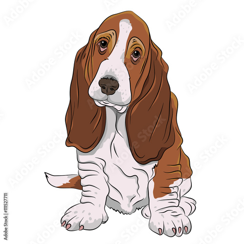 basset hound puppy realistic vector illustration isolated ...