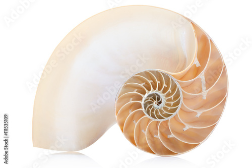 Nautilus shell section on white, clipping path