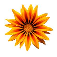 Gazania Jaune Et Orange