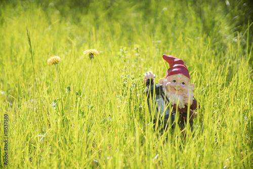 Fotografie, Obraz  garden gnome standing in the grass