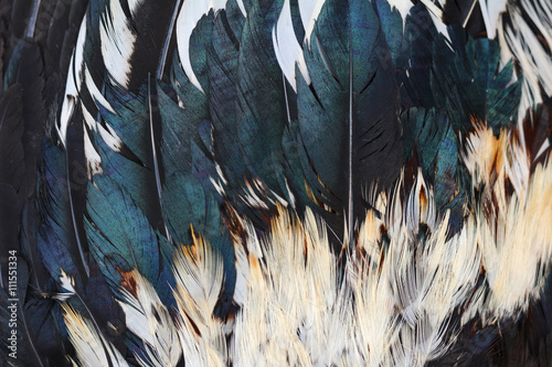 Photo  Background of chicken feathers