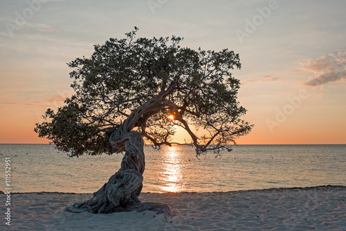 Photo Divi divi tree on Aruba island in the Caribbean Sea at sunset