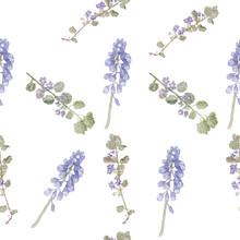 Pattern Purple Flowers. Field Flowers, Fine Grass Pattern Watercolor