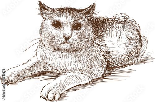 Poster Croquis dessinés à la main des animaux scared cat