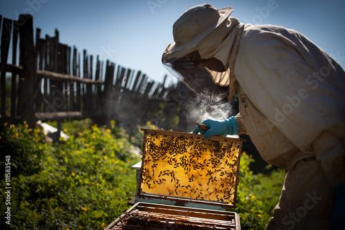 beekeeper Wallpaper Mural