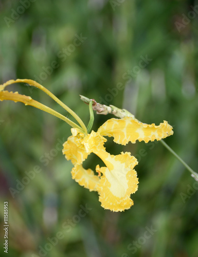 Fototapeta Orchid obraz