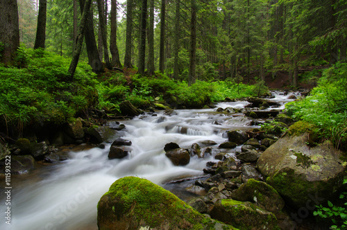 Mountain river in forest. - 111593522