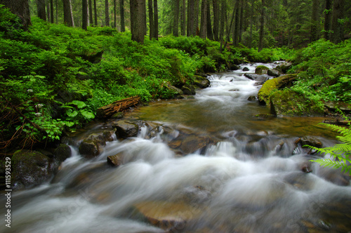 Mountain river in forest. - 111593529
